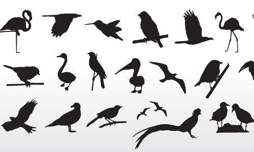 Bird Collection By VectorOpenStock
