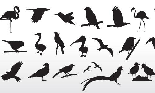 Bird Collection By VectorOpenStock