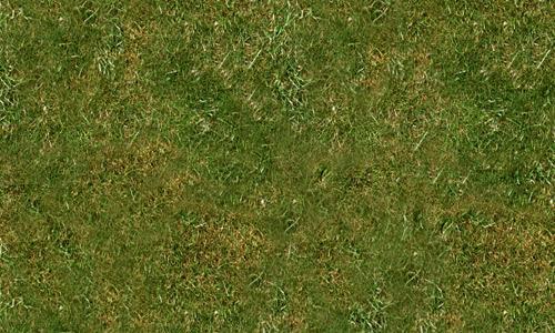 Grassy Texture 01