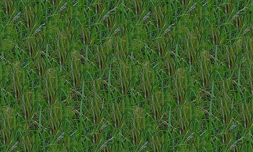 Large Grass